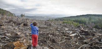 hectare de pădure